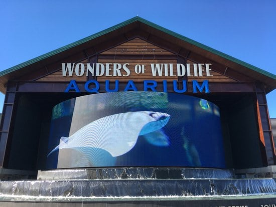 Wonders of Wildlife